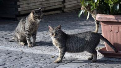 Photo of Νεκρές γάτες από φόλες βρέθηκαν στην Ηρακλείτσα